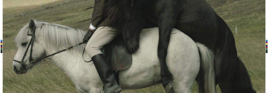 om män och hästar